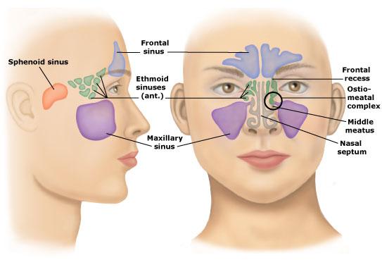 أعراض تقول تعاني التهاب الجيوب bntpal_1479463062_99