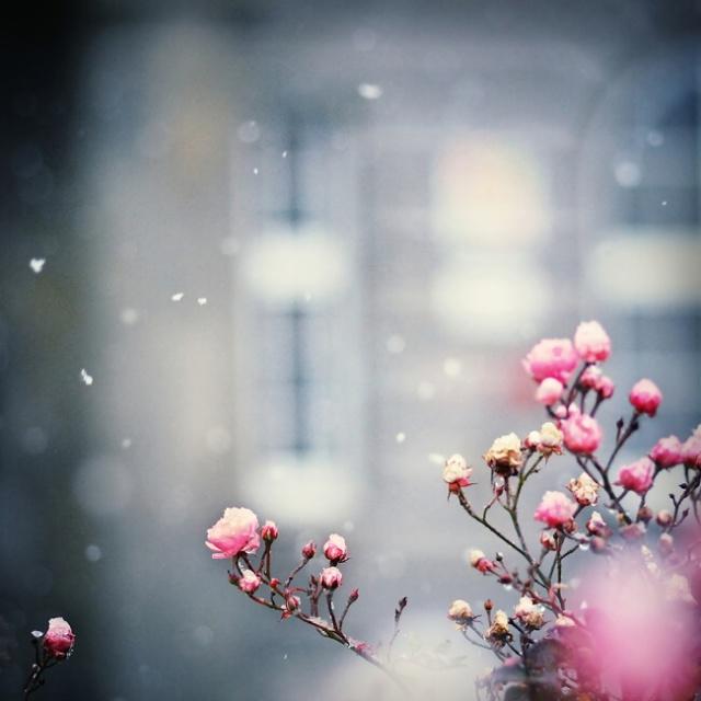 ويكثر الحنين الشتاء //صور للتصميم~ bntpal_1486225495_89