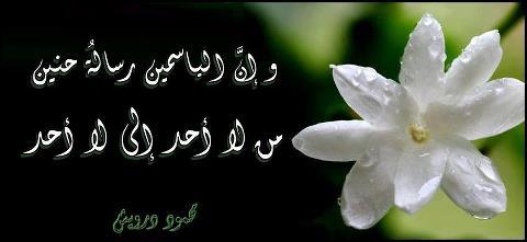 الياسمين رسالة حنين bntpal_1502000616_36